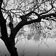 Tree_silhouette_pse